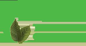 LIH Tea Company logo